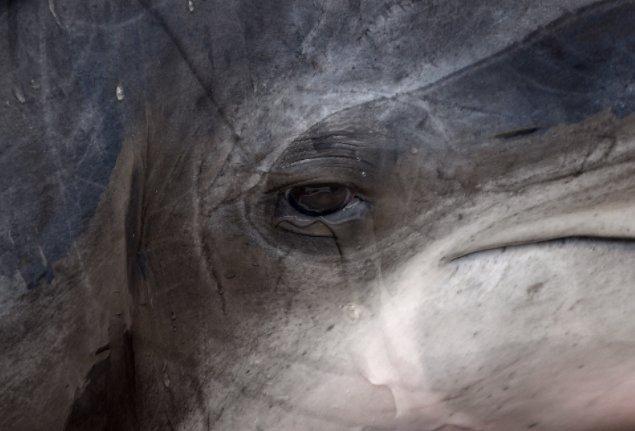 [뉴스룸 토크/ 나는 돌고래다] '대한민국을 돌고래 무덤 국가로 격하시킨 울산 남구 장생포 고래생태체험관을 기억하리라.' https://t.co/YmL9ONoPAh