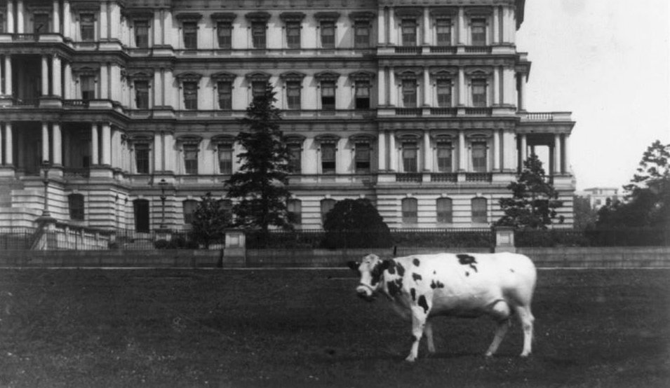 Pres. Taft had a cow.  A brief photographic history of some of the First Pets at the White House. https://t.co/5QQtun3Ygs