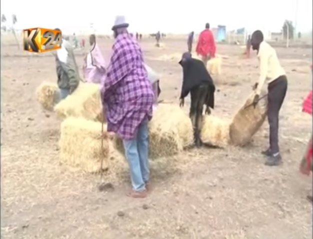 Pastoralists in Kajiado benefit from free donation of hay to feed their livestock