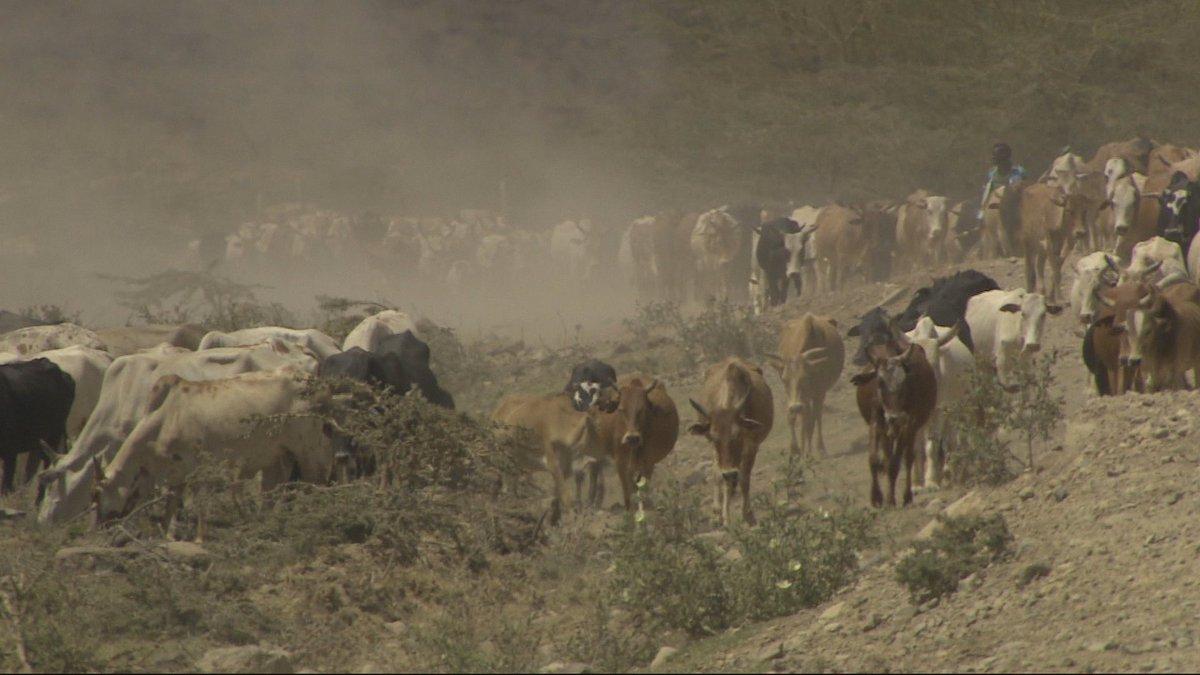 Kenya: Animals killed, ranches razed in herders' invasion