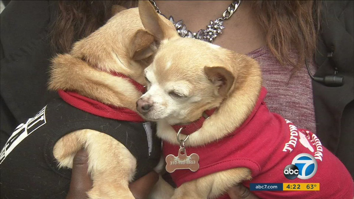 Having pets can improve your overall health, studies show