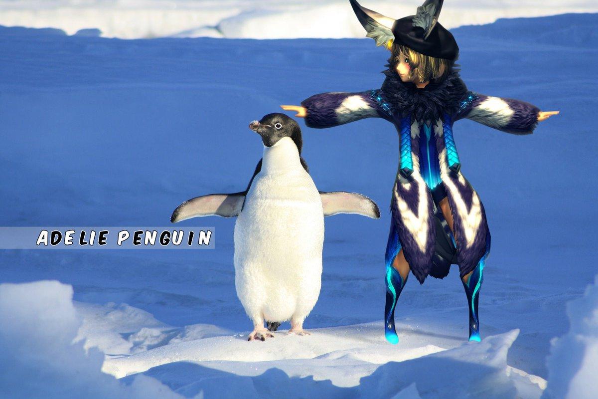 ペンギンと遊ぶ。#ブレイドアンドソウル