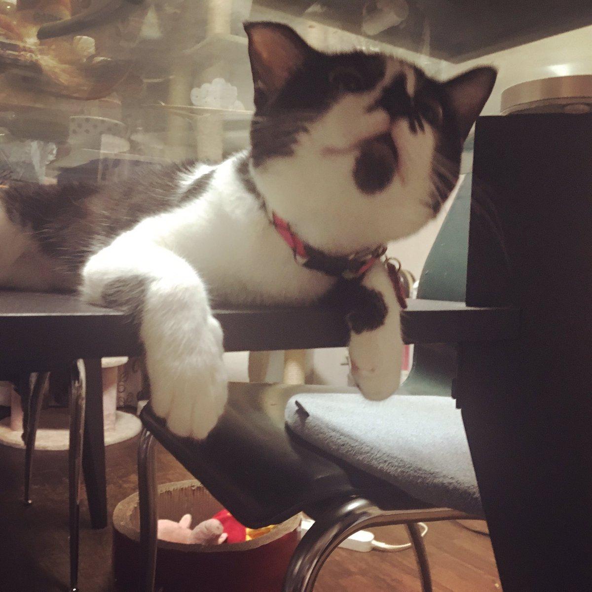 しずくちゃん今日無事に抜糸終わりました!さっそく狭いところに入りまくり♫#猫好きさんと繋がりたい #猫モフー  #カラー