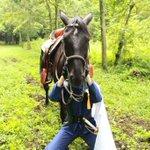 空前絶後のォォ!!!超絶怒涛の馬乗りコスプレイヤー!!!馬を愛しッ!!馬に愛された女ァアア!!!とうらぶ、アルスラーン戦