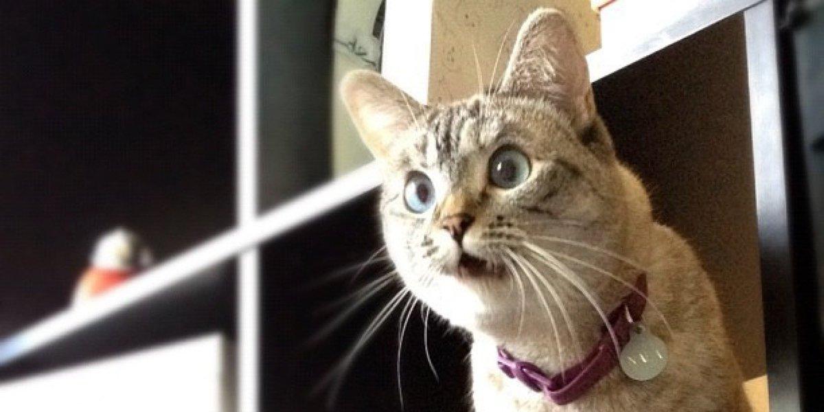 実は私は猫アレルギー🐱でもねこはすき、だいすき#猫の日