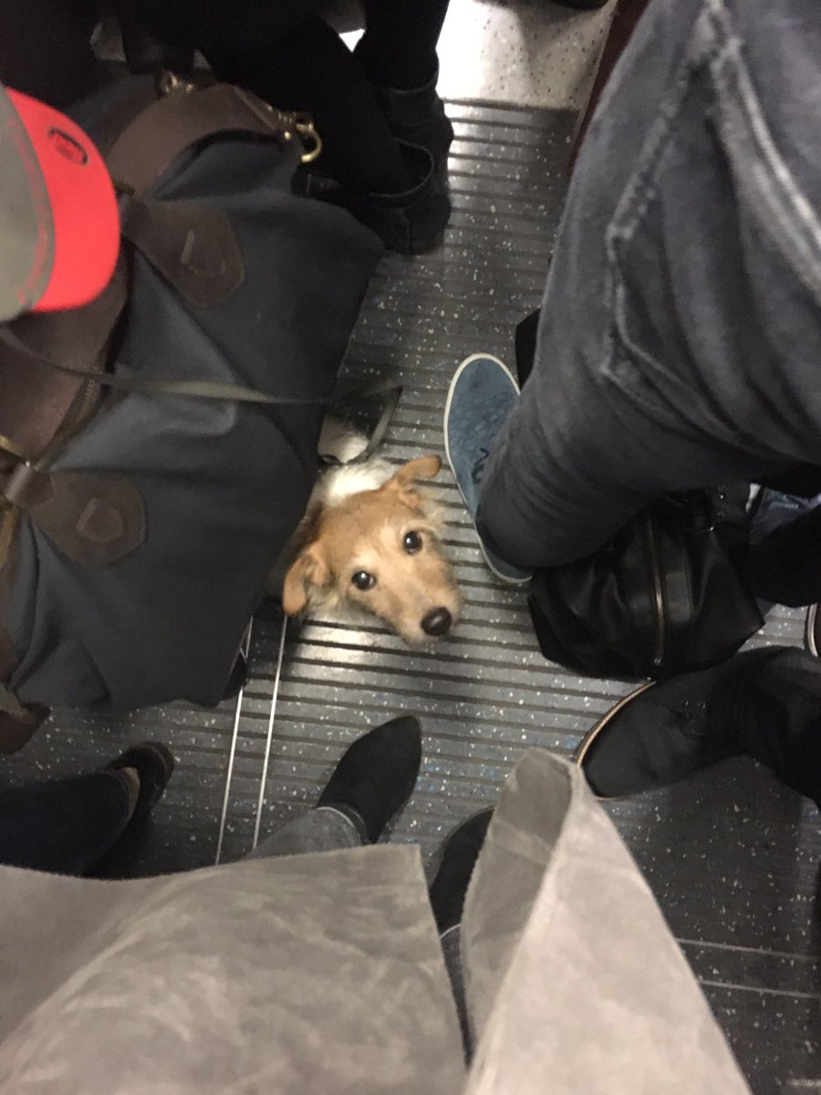 RT @SummerRay: When you make eye contact with a fellow commuter and silently share the pain of rush hour https://t.co/lHEKQas99N