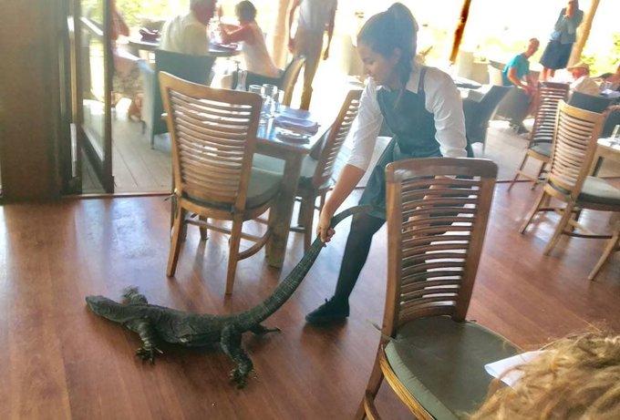 Garçonete expulsa imenso lagarto de restaurante: 'Achei que fosse um cão'. https://t.co/2VlUfxYYLF