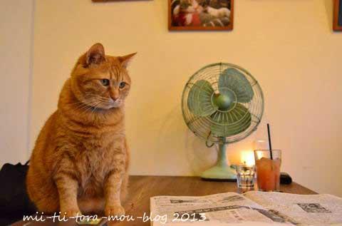 【おうちごはんcafeたまゆらん 猫店員紹介】名前:サヴォン  オーニャーです。2016年9月に10歳のお誕生日を迎えま