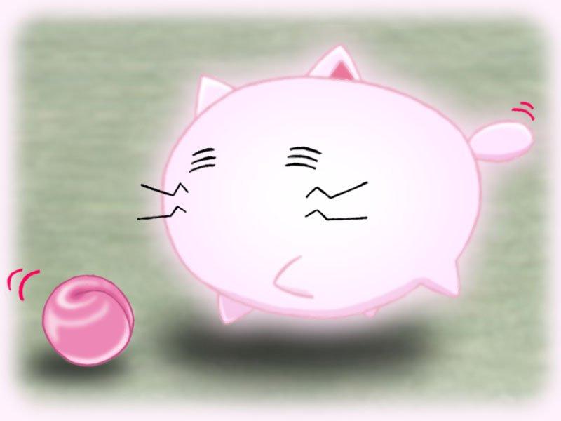 今日は猫の日♪(*´ω`*)#猫の日 #たまゆら #tamayura