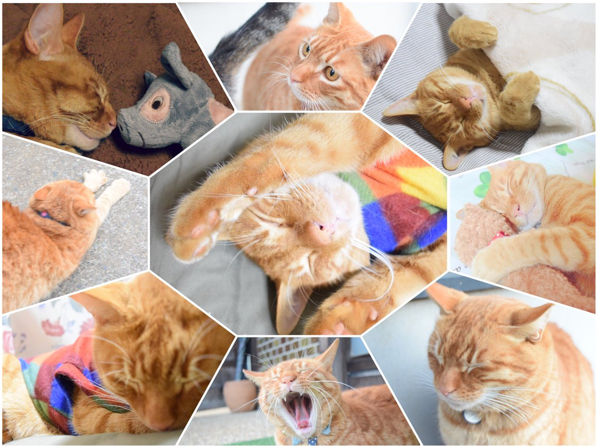 猫の日🐈#猫の日 #猫猫猫祭り #猫の日なのでネコ画像を貼ろう #ハウル