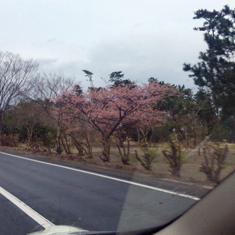 惡の華おもしれー全部買ってこようかなそう言えば地元の河津桜ばりばり咲いてました🌸