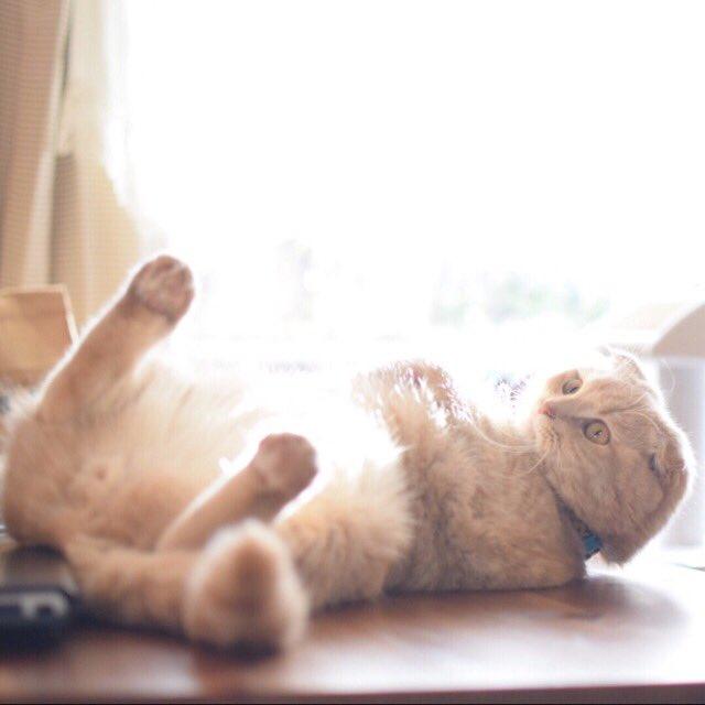 猫の日の朝…思わず…ラピュタの♪ランランララランランラン♪というメロディーを口ずさまずにいられなかった…きなちゃんお腹の