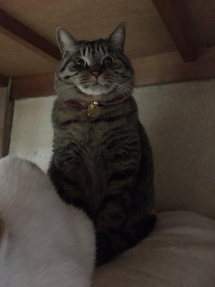 猫の日〜!我が家のニャンコは押入れの中でトトロにみたいになってたwww