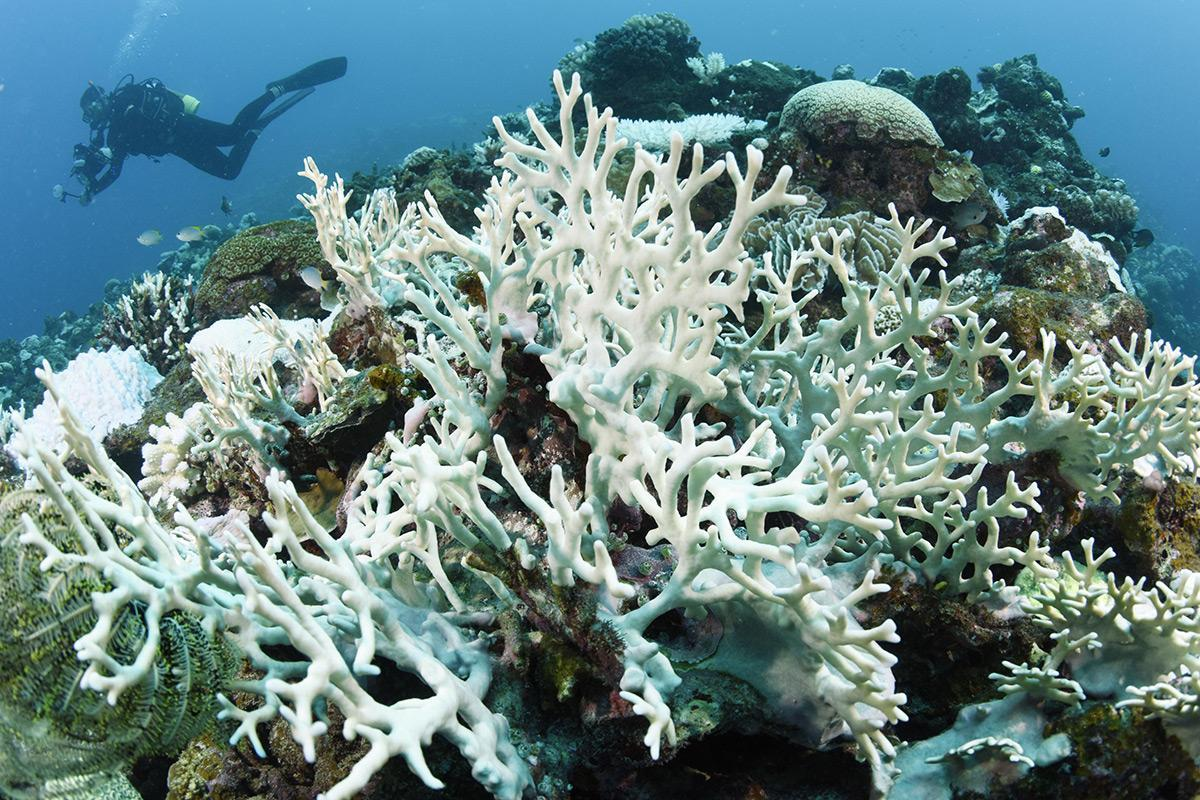 Worst-ever coral bleaching event continues into fourth year https://t.co/93I5WKSZM9