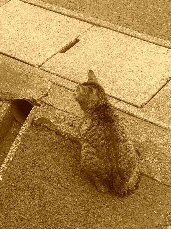 僕の家のベランダにいつも餌をくれと目で訴えてくる猫が2.3匹。僕は友達が少ないからけど少ない分信用できるから猫達も同じ気