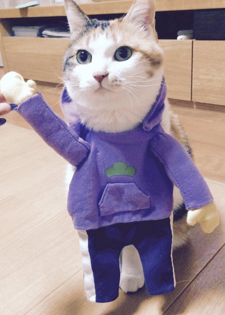 猫の日だからのせとこう この漫画で描いて実際にむにさん(@muuuuuniiin)がつくってくださったイッチパーカーを着たうちのこです