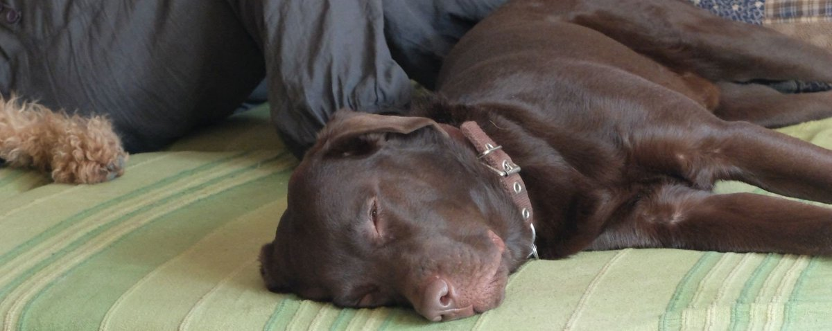 RT @Berti_and_Ernie: Chill-out time. https://t.co/9sjOAN1Pd9