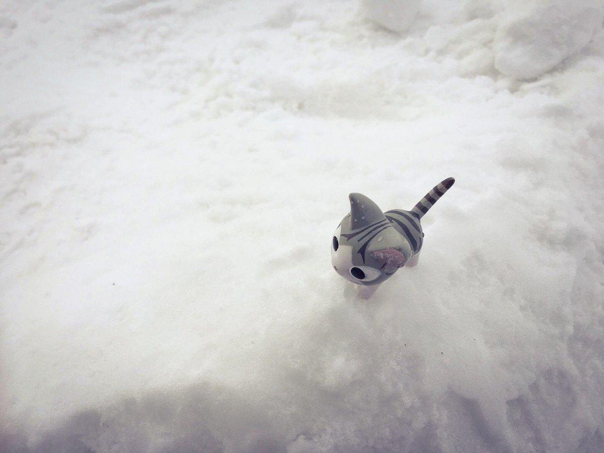 雪のダイチをあるく時、シンチョー! すべらない、ジュンチョー! リズムにのってゼッコーチョー! あっ…#こねこのチー #