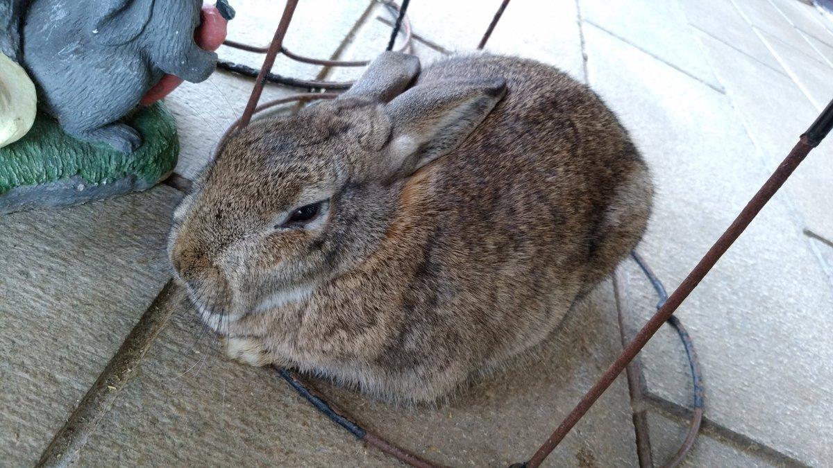 ウサギ見てるとなんだか天地無用を想い出すリョウオウキ?全然似てないけど