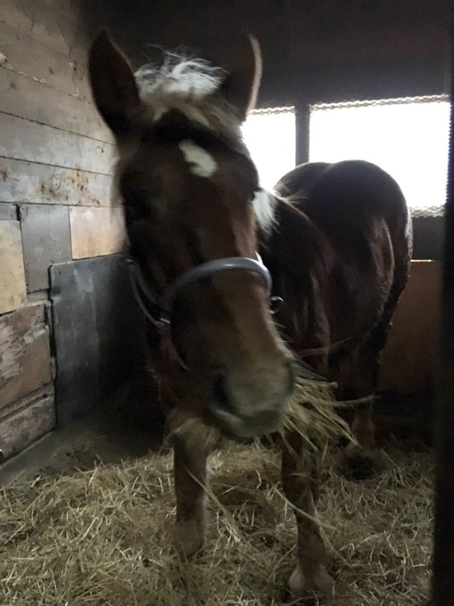 この間女の子(馬)が来ました。さおりちゃんとしずくちゃんです☺︎可愛いー( ´艸`)トラックにいるのがさおりちゃん。草を
