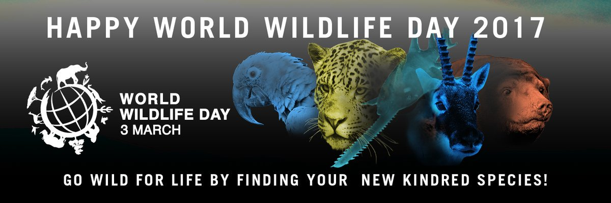 Happy #WorldWildlifeDay! 5 new species are receiving attention & protection. @UNEP explains: https://t.co/ZCRb3NtNYg https://t.co/bodcYiLcle