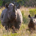 2 men to appear in court after attack on rhino sanctuary