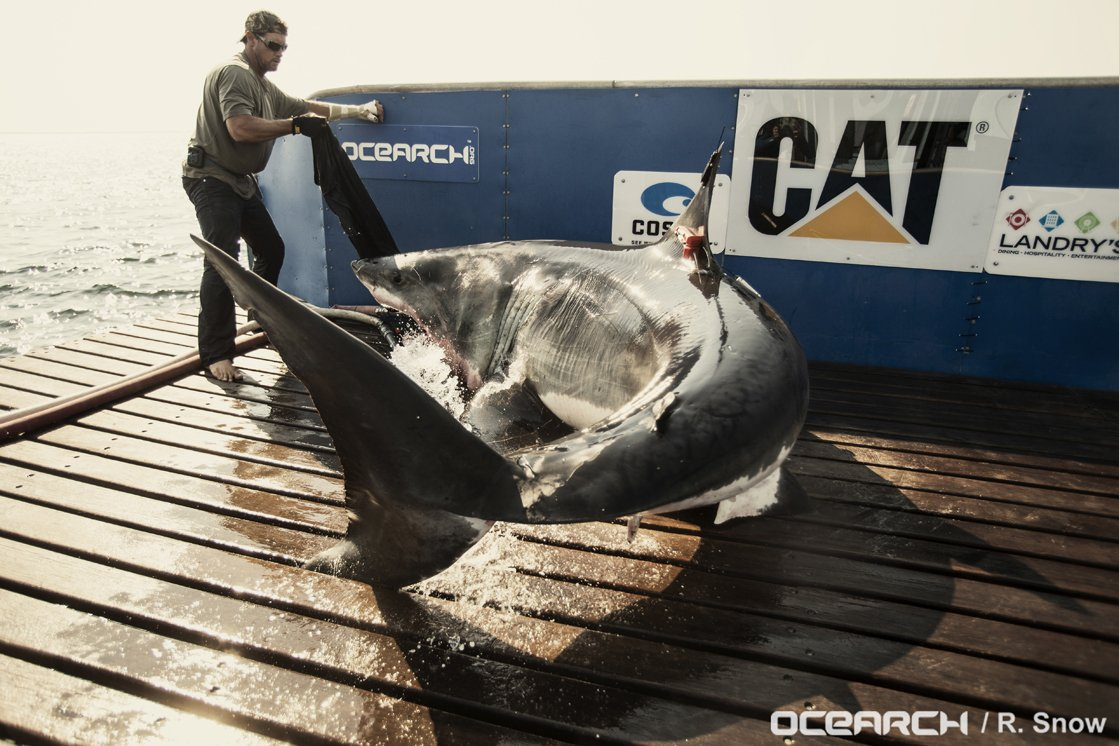 RT @Shark_Katharine: Got that #FridayFeeling... How about you?!?! https://t.co/mpbfVFvF4L