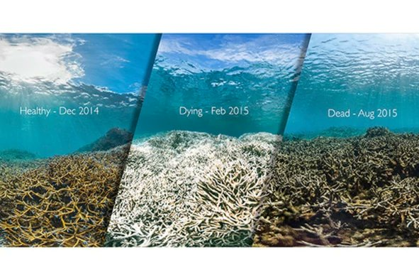 RT @EcoInteractive: #Corals May Get Temporary Reprieve from Bleaching ~ https://t.co/o ...