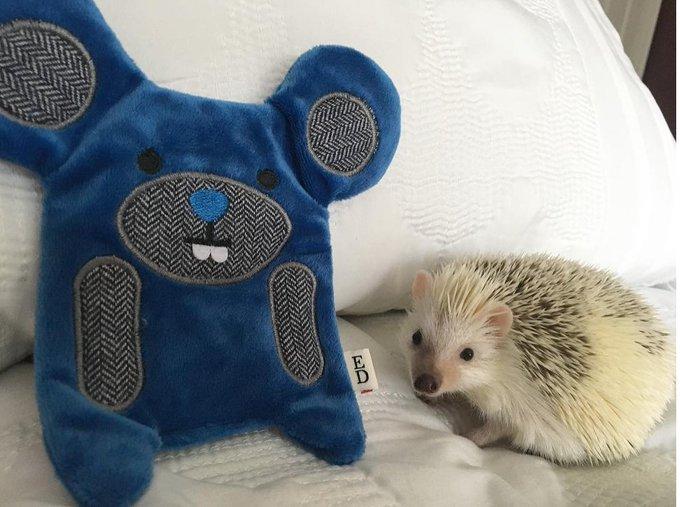 @TheEllenShow: Everyone's welcome at #EDbyEllen. Especially hedgehogs. #EDbyPetSmart https://t.co/rsNOXjWULZ https://t.co/PLznoZjB0L