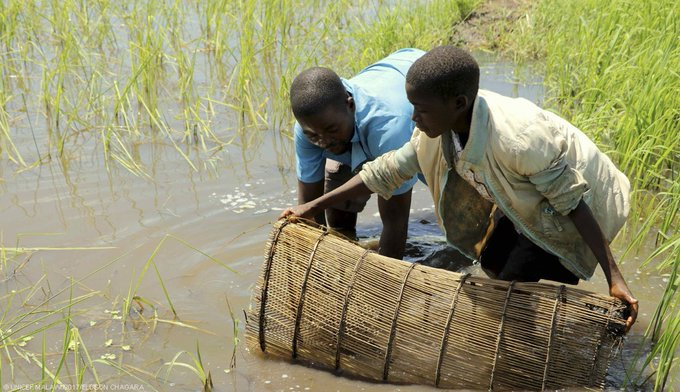 Since the hunger crisis began in #Malawi, life has been hard for fishing communities. This is Ronald's story: https://t.co/77qQZxCYFi