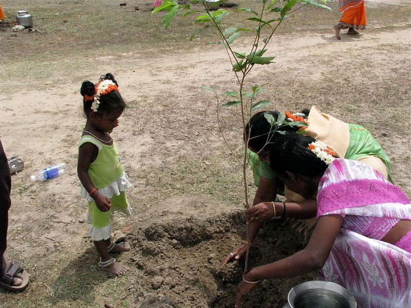 India now holds world record for planting 50 million trees in a day https://t.co/7qR5l0aKDV