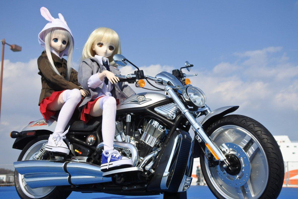 たま:今日はバイク日和だにゃ~めんま:風がきもちいいね!