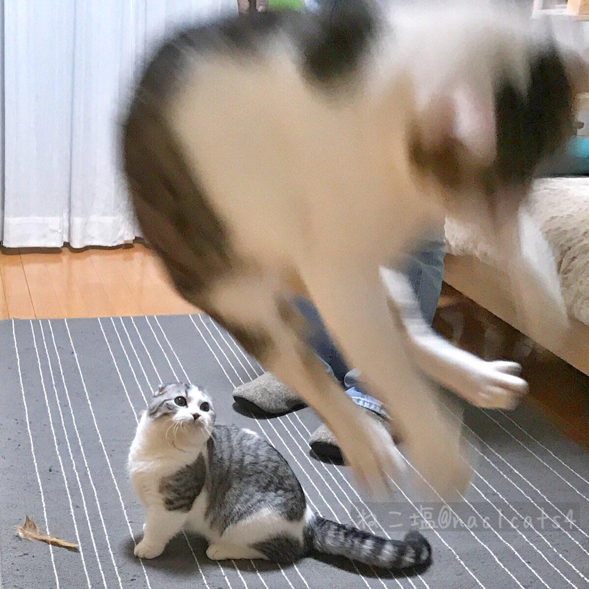 おこめ『お麦お兄ちゃん躍動感スゴい! よしっ、ボクも!!』おこめさん、残念なジャンプ力…(床から脚が離れてないですよ💦