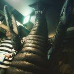 .サドラくん登場♪ 怪獣酒場にて.#ウルトラマン #ウルトラ怪獣 #怪獣 #怪獣ソフビ #ソフビ怪獣 #フィギュア #玩