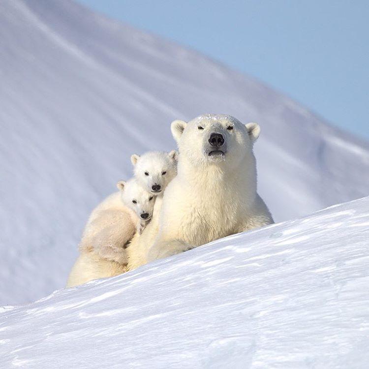 A Baffin Island family portrait. 📷  jonhuyer via Instagram. #ExploreCanada #DiscoverNunavut