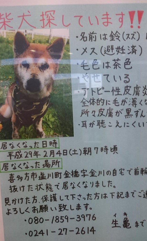 郵便局に貼ってありました。12歳と高齢でアトピーとかもあるみたいなので、早く見つかってほしいです🙏#迷子犬#柴犬#会津