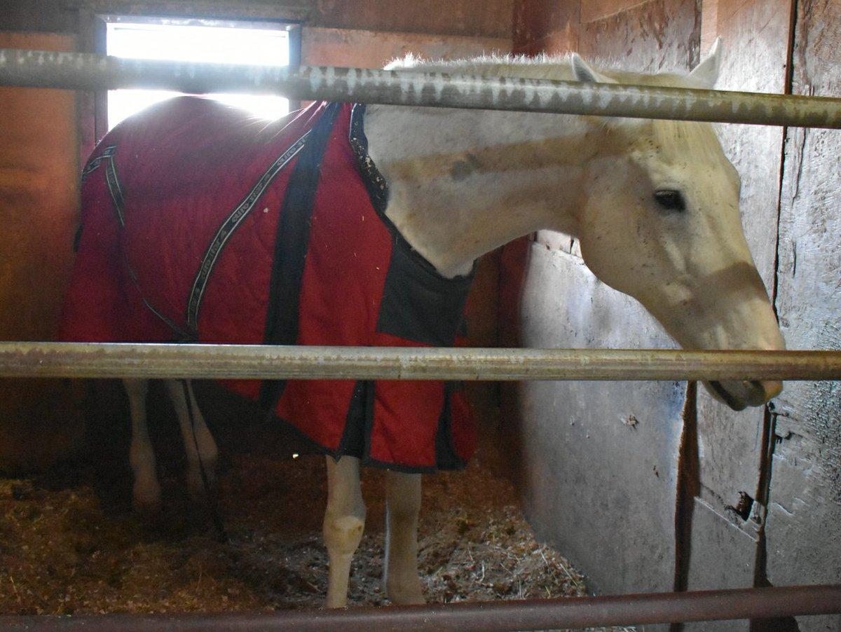 1.オグリキャップの仔マンダリンルビー20歳(乗馬名コリン)。2.一族からブラックエンブレムやナリタセンチュリーが出てい