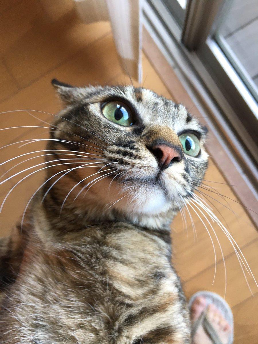 2月28日横浜市でおにぎり盗難事件が発生しました。容疑者はきなこ(8ヶ月)。調べによると、きなこはキッチンカウンターに登