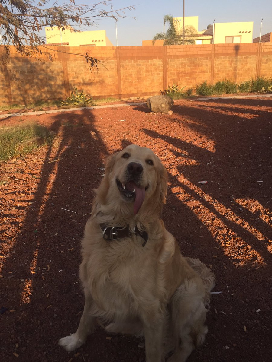 le tome una foto a mi perro mientras le aventaba la pelota y sin querer le di en la cara 😩😩😩