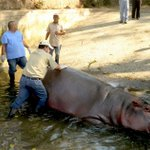 Hippo brutally beaten to death at zoo in El Salvador
