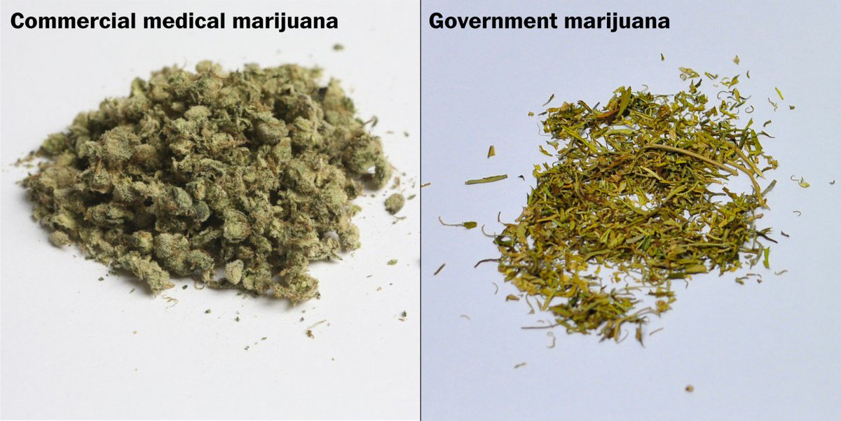 Government marijuana looks nothing like the real stuff. See for yourself. https://t.co/UKNSYwqPWQ