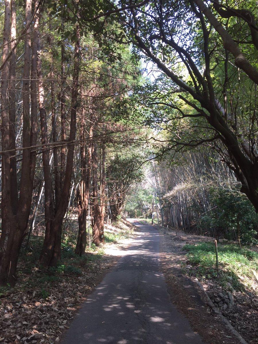 朝七時から歩きっぱなしからの山はきつい…!はじめの一歩はみらいの一歩に励まされ無事つきました!やっぱり次のお寺には間に合