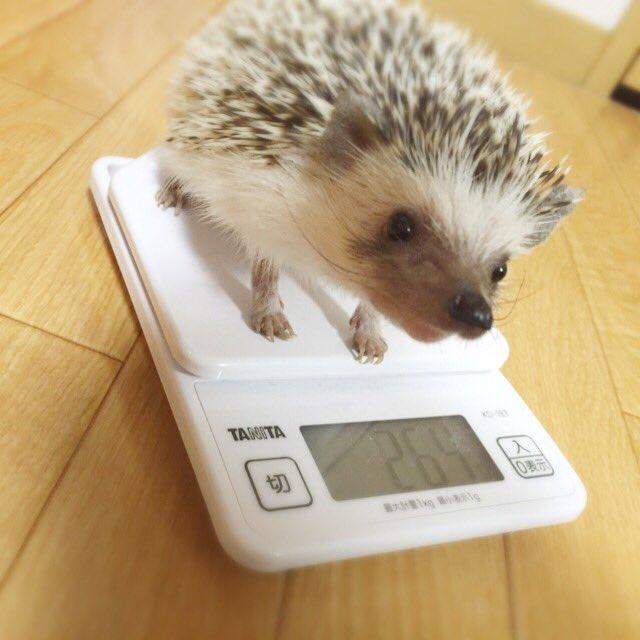 うちの松太郎くんは、体重が一向に増えません…むしろ一時期より減ってて心配です💦フードもいろいろ工夫してみて、食べないこと