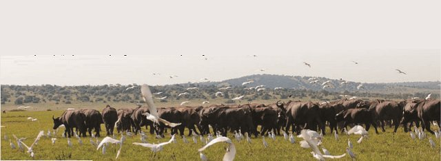 Rwanda to share RWf53bn conservation award