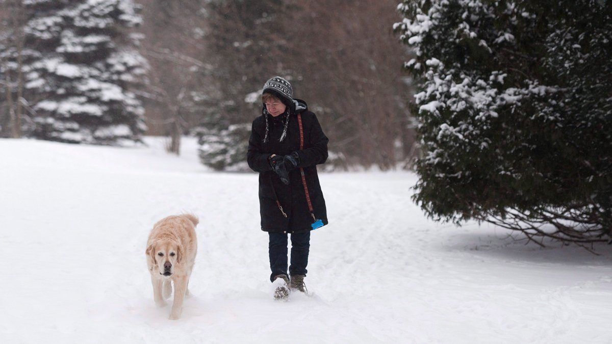 Winter storm settles into southern Ontario
