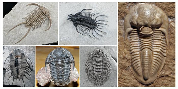 Celebrate #TrilobiteTuesday by exploring the Museum's trilobite website! Learn more: https://t.co/Q7Im7pIZVR https://t.co/wAArzsgwGP