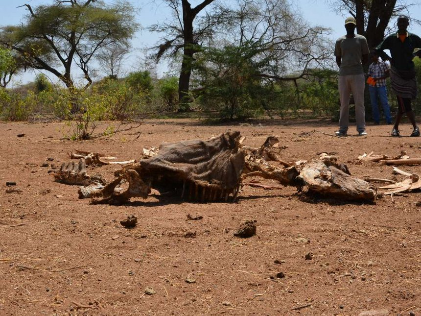 Garissa fights disease, hunger in long drought
