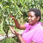 Farmers to train on how to get market for passion fruits