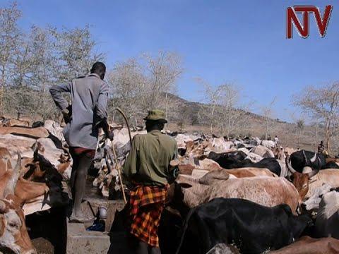 Kenya hails Uganda for granting grazing permission for Turkana pastoralists
