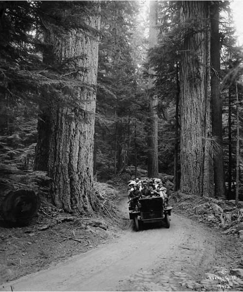 Asahel Curtis  A Tourist Truck Drives Through a Forest of Towering Fir Trees, 1910s https://t.co/BqyS5N4LoL